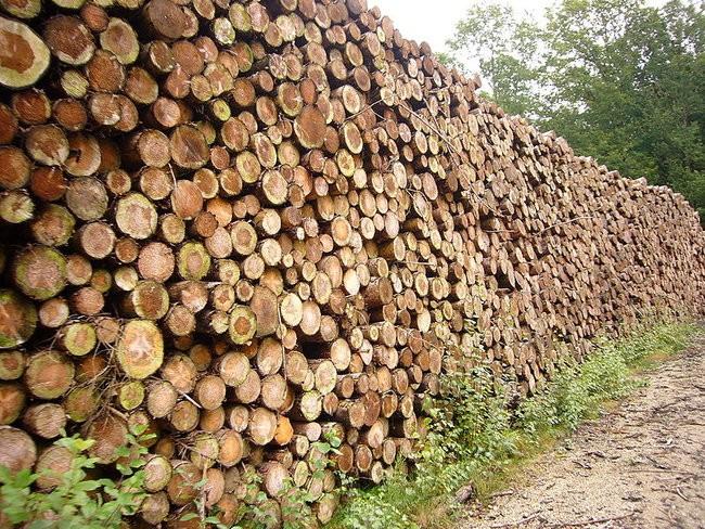 Soirée débat CIVAM le 27 novembre : filière bois-energie