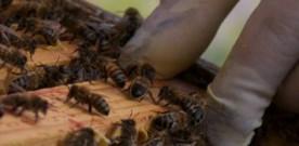 Stage apicole à la Ferme d'Armenon