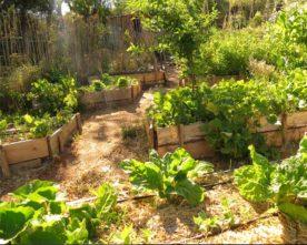 Cours certifié de permaculture aux Molières : 17-21 juillet & 18-22 sept. 2017