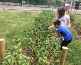 Petit jardin fruitier partagé
