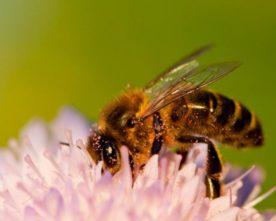 Des jachères apicoles aux Molières